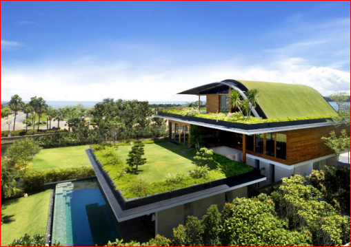Green Roof For The House