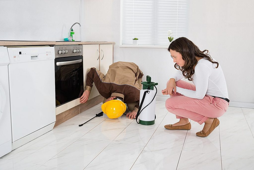 Steps to Get License for Pest Control Inspection Services