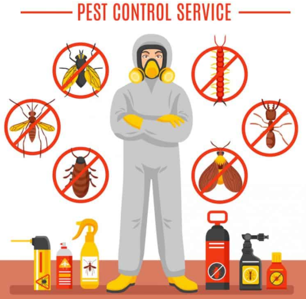 Pest control Tweed Heads