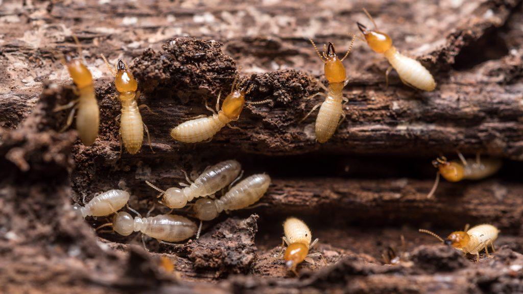 ant control Tweed Heads